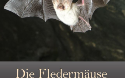 Unsere Broschüre über die Walliser Fledermäuse ist gerade erschienen!